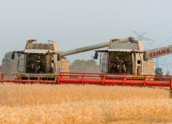 Getreide-8